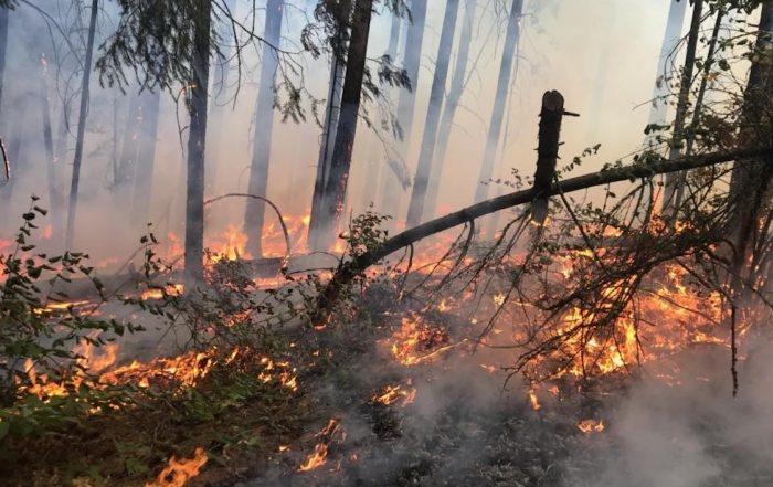 Feux préventifs réalisés par l'U.S Forest service Pacific Northwest region en octobre 2018 licence CC