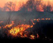 Le dérèglement climatique facteur aggravant de l'incendie en Corse (Photo AdinaVoicu - Flickr)